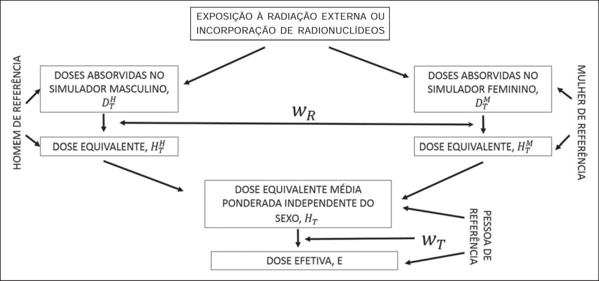 Correlação entre dose efetiva e riscos radiológicos: conceitos gerais
